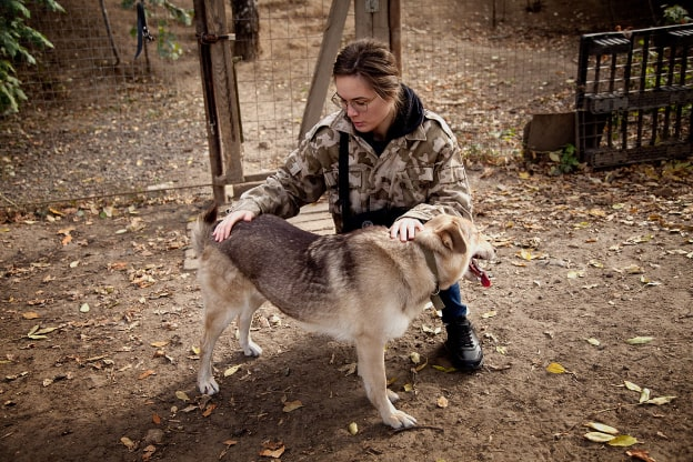 Девушка-волонтёр и собака