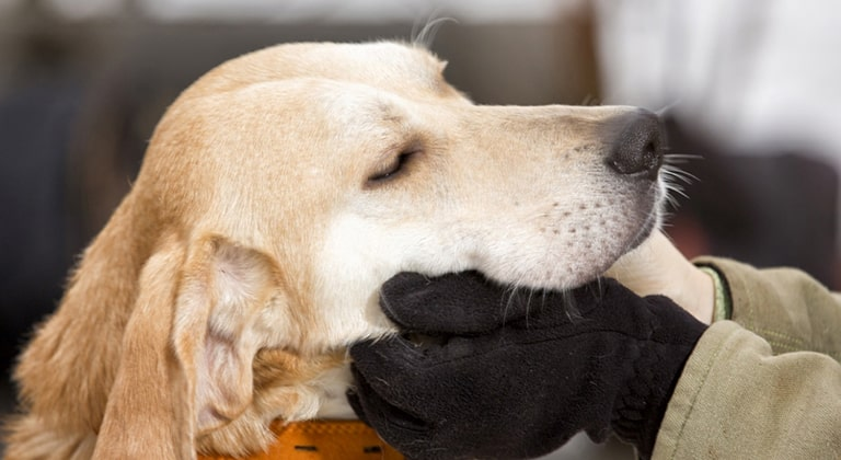 Помощь бездомным беспородным животным