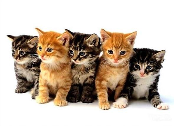 Изображение котят