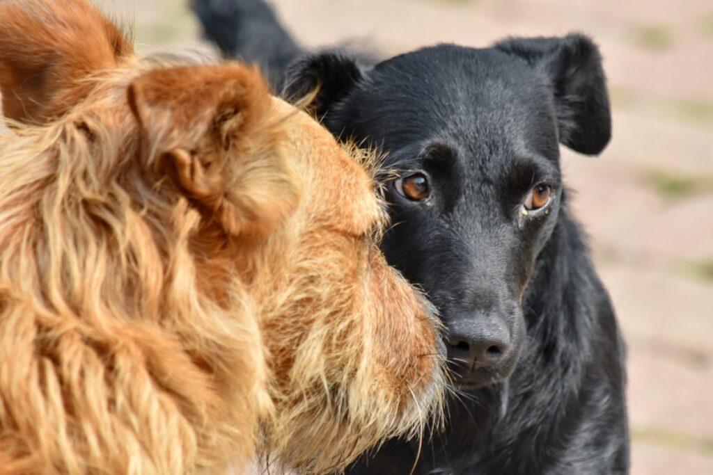 В приютах есть множество собак, которые готовы стать вашим другом прямо сейчас