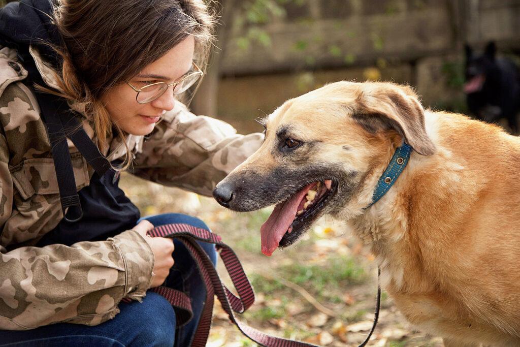 Наши волонтёры ежедневно приходят в приют, чтобы пообщаться с собаками