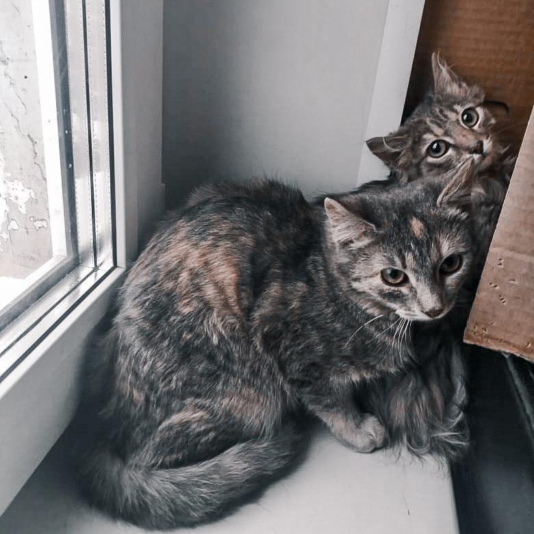Зефирка и Доминика прячутся за коробкой